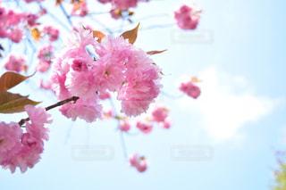 花の写真・画像素材[448536]