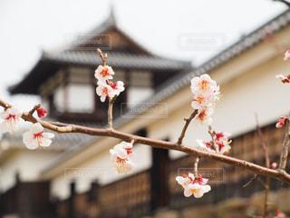 春の写真・画像素材[403688]