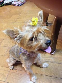 犬の写真・画像素材[404677]