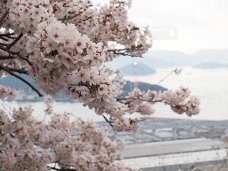 桜 - No.422093