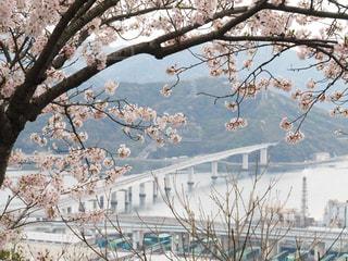 桜 - No.422095
