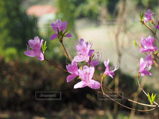 春の写真・画像素材[431163]