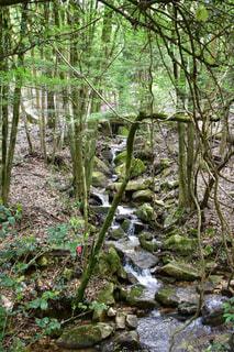 森の写真・画像素材[451669]