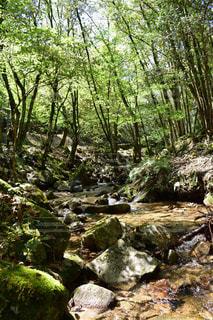 森の写真・画像素材[453362]
