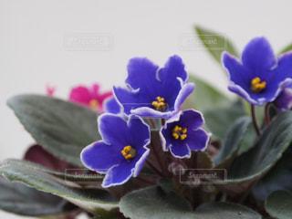 花の写真・画像素材[508478]