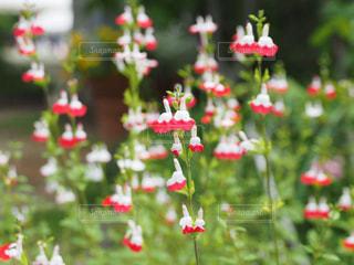 可憐な夏花の写真・画像素材[647544]