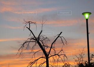 夜明けの風景の写真・画像素材[726918]