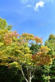 夏から秋へ - No.758607
