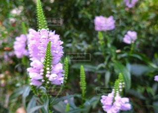 近くの花のアップ - No.760059