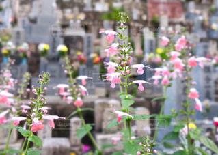 お彼岸の夏花の写真・画像素材[760060]