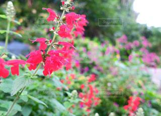 道端の夏花 - No.760061