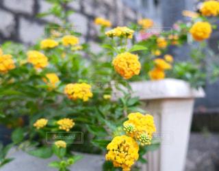 道端の夏花 - No.760062
