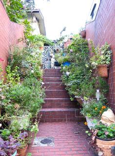 玄関の夏花の写真・画像素材[760064]