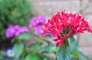 玄関の夏花の写真・画像素材[773279]