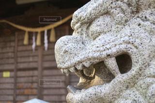 狛犬の写真・画像素材[846884]