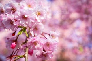 花の写真・画像素材[659206]