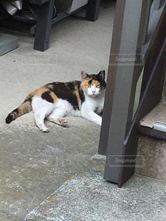 猫の写真・画像素材[648727]