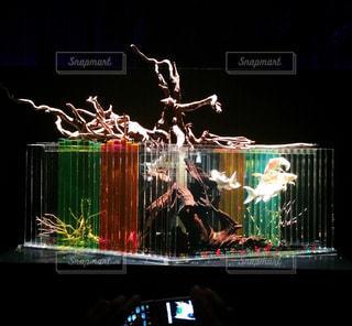 熱帯魚の写真・画像素材[409265]