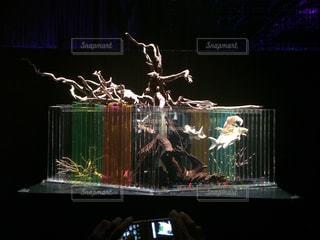 熱帯魚 - No.409266