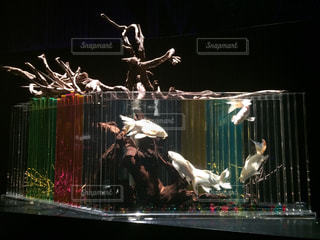 熱帯魚 - No.409268