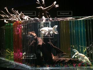 No.409270 熱帯魚