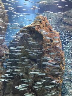 魚 - No.418018