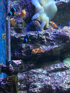 魚の写真・画像素材[418023]