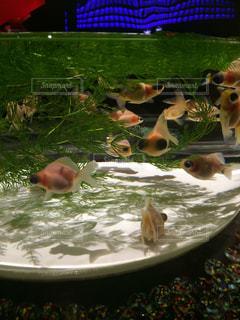魚の写真・画像素材[418034]
