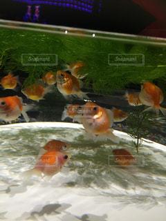魚 - No.418039