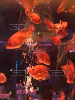 魚 - No.418046