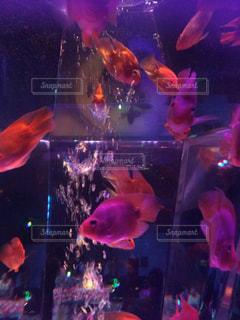 魚の写真・画像素材[418047]