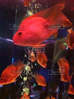魚 - No.418048