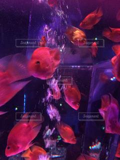 魚 - No.418049