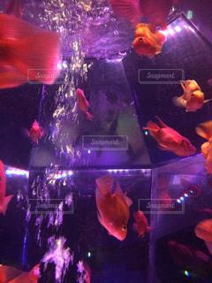 魚 - No.418050