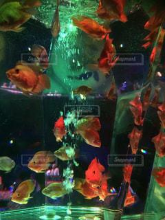 魚 - No.418051