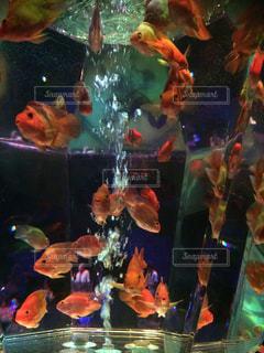 魚 - No.418052