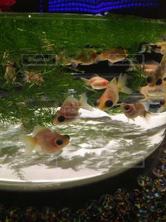 魚の写真・画像素材[418053]
