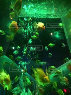 魚 - No.418081