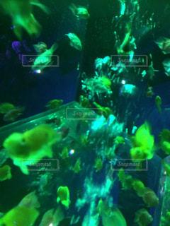 魚 - No.418083