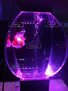 魚 - No.418085