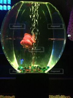 魚 - No.418086