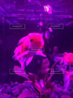魚の写真・画像素材[418095]