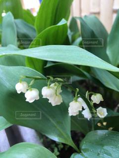 #花#白の写真・画像素材[404391]