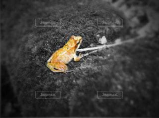 生き物の写真・画像素材[412875]