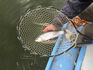 魚の写真・画像素材[406405]