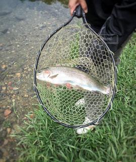 魚の写真・画像素材[407972]