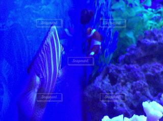 魚 - No.431493