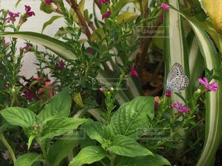 近くに植物の花のアップの写真・画像素材[715425]