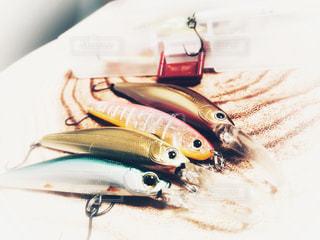 魚の写真・画像素材[833347]