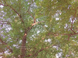 木のクローズアップの写真・画像素材[3260433]